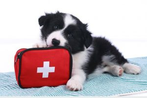 trousse de secours animal